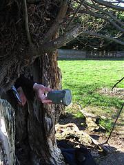 Helpful Tree